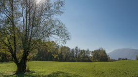 Meadow with tree and green grass. With blue sky in the background Stock Photo