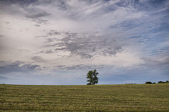 Meadow with tree on horizon Royalty Free Stock Image