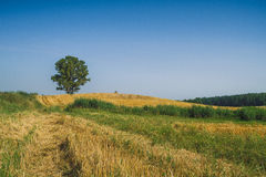Meadow and tree. Stock Photo