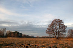 Meadow,tree Royalty Free Stock Images