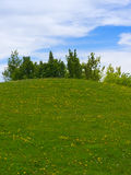 Meadow with Trees Stock Photography
