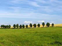 Meadow with trees Royalty Free Stock Photos