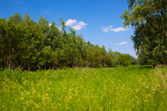 Meadow with trees and bright blue sky. In summer day royalty free stock images