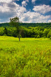 Meadow and trees at Canaan Valley State Park, West Virginia. Stock Photography