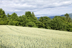 Meadow and Trees Stock Photography
