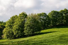 Meadow and trees. Green meadow and trees - spring Royalty Free Stock Images