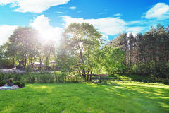 Meadow and trees. Stock Photography