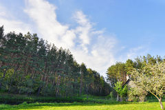 Meadow and trees. Royalty Free Stock Images