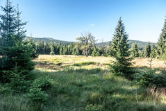 Meadow with trees and hills on the background in Sumava mountains Stock Photos