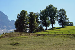 Meadow with trees in the mountains in Switzerland Royalty Free Stock Images