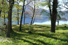 Meadow with trees and park bench on a blue mountain lake Stock Images