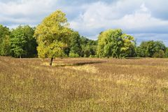 Meadow, trees and sky in a delightful light. _2. Meadows and expanses of the European part of Russia stock photo