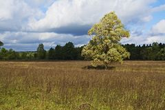 Meadow, trees and sky in a delightful light. _7. Meadows and expanses of the European part of Russia Royalty Free Stock Image