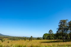 Meadow and trees at Thung Salaeng Luang , Phetchabun. stock photo