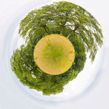 Meadow with treeslike little planet Royalty Free Stock Photography