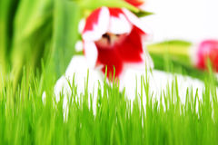 Meadow and tulip Royalty Free Stock Image
