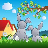 Meadow with two rabbits Stock Photo