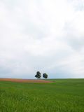 Meadow with two trees Stock Photos