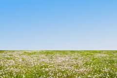 Meadow Summer or Spring stock photos