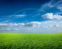 Meadow under blue sky and rainbow. Meadow of green fresh grass under blue sky and rainbow Stock Image