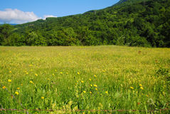 Meadow under the summer sun Royalty Free Stock Images