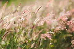 Meadow under sunlight Stock Image