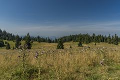 Meadow under Velky Choc hill in north Slovakia in summer Royalty Free Stock Photography