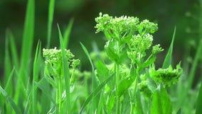 Meadow vegetation in rain stock video