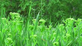 Meadow vegetation in rain stock footage