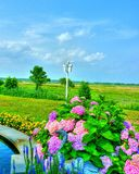 Meadow View with colorful flowers Royalty Free Stock Photo