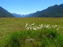 Meadow. View over Eglinton Valley in New Zealand royalty free stock images