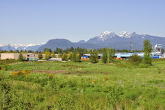 Meadow view in Pitt Meadows City Stock Image