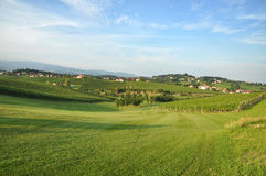 Meadow and vineyards, Slovenia Royalty Free Stock Images