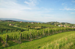 Meadow and vineyards, Slovenia Royalty Free Stock Image