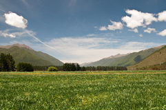 Meadow at Wairau Valley Stock Photos