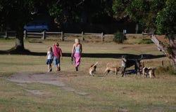 Meadow walk royalty free stock photo