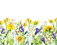 Meadow watercolor flowers card. Watercolor wild bellflowers, dandelion, daisy, weeds and herbs background. Hand painted natural illustration Royalty Free Stock Photos