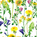 Meadow watercolor flowers seamless pattern. Watercolor wild bellflowers, dandelion, daisy and herbs background. Hand painted natural illustration Stock Images
