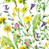 Meadow watercolor wild flowers seamless pattern Royalty Free Stock Images