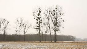 Meadow and wetland floodplain forest covered with snow in winter, landscape of Poodri, protected landscape area. Very nice, world-wide wetland territory of the stock video footage