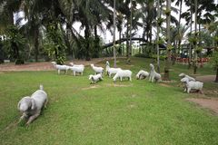 A meadow with white sheeps and grass and trees and stones in the Nong Nooch tropical botanic garden near Pattaya city in Thailand Royalty Free Stock Image
