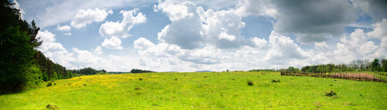 Meadow wide view Stock Photography