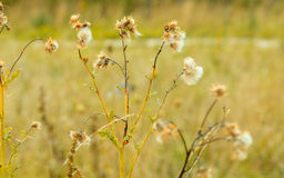 Meadow wild flowers on blurred background Royalty Free Stock Photo