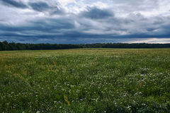 Meadow with wild flowers on a cloudy day Royalty Free Stock Image