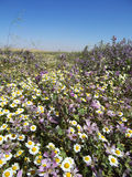 Meadow with wild flowers. Wild meadow with fresh flowers blossom Stock Photography