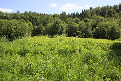 Meadow with wild flowers in front of a forest Stock Photography