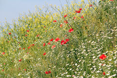 Meadow with wild flowers Stock Photo