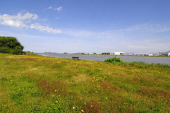 A meadow with wild flowers on a river beach Stock Photography