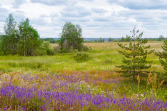 Meadow wild flowers Stock Photography