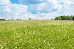 Meadow wild flowers Royalty Free Stock Photo